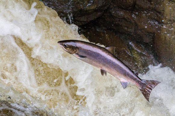 Norwegen Aktien Lachs Fischzucht